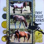 New_Forest_ponies_copy.jpg