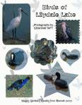 Birds_of_Lilydale_Lake.jpg